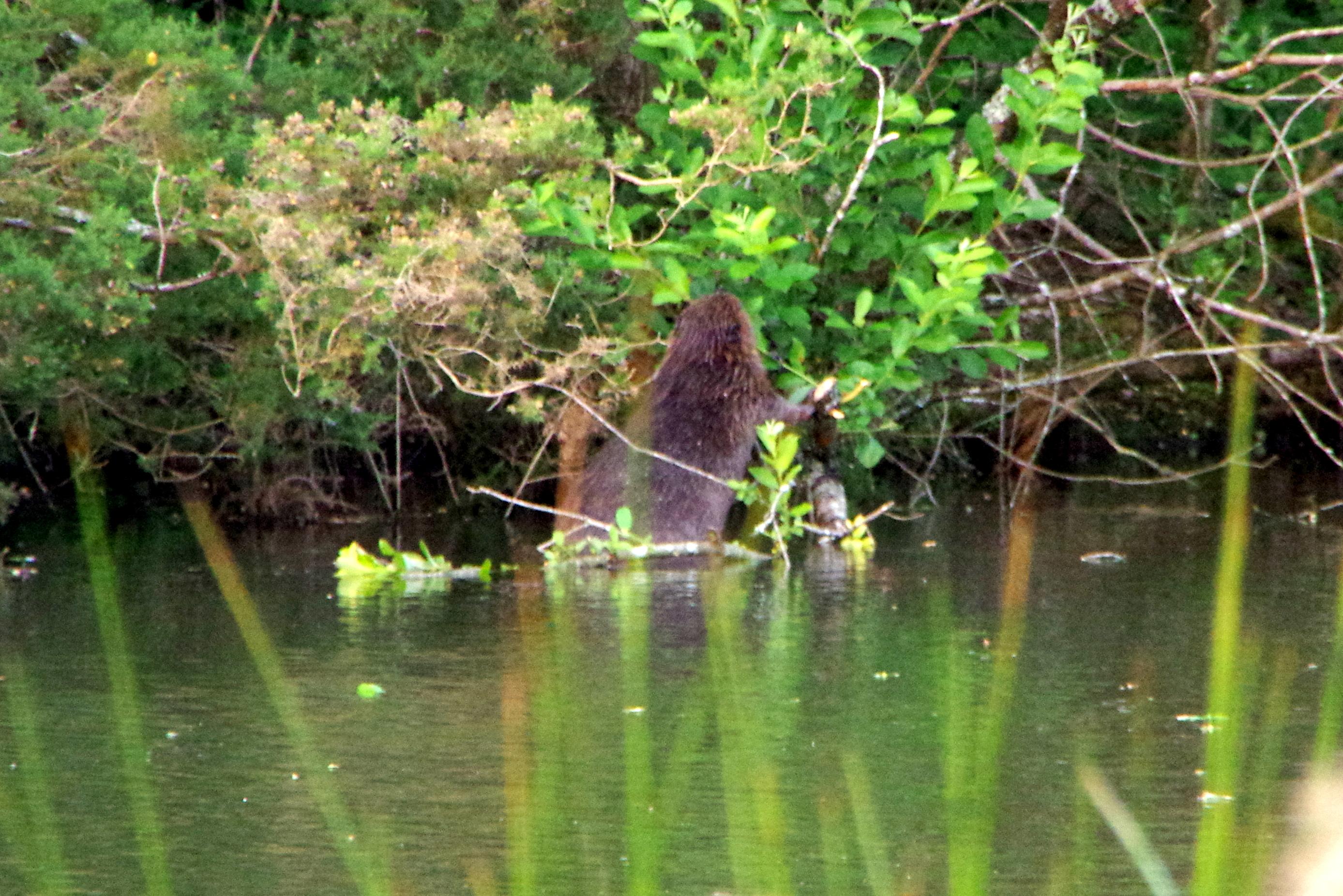Beaver Field Trip
